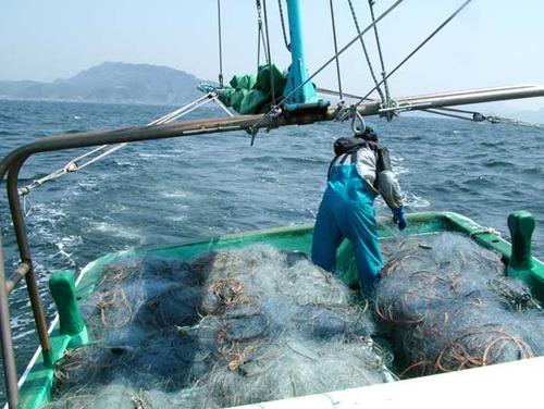 蟹きゅう/タカアシガニ