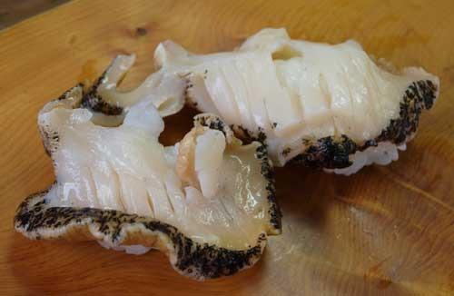 右巻竪琴梨法螺/ミギマキタテゴトナシボラ