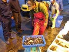 平塚魚市場