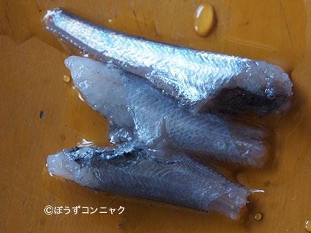 キュウシュウヒゲの刺身