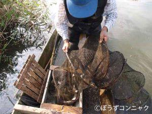 ナマズ漁の様子