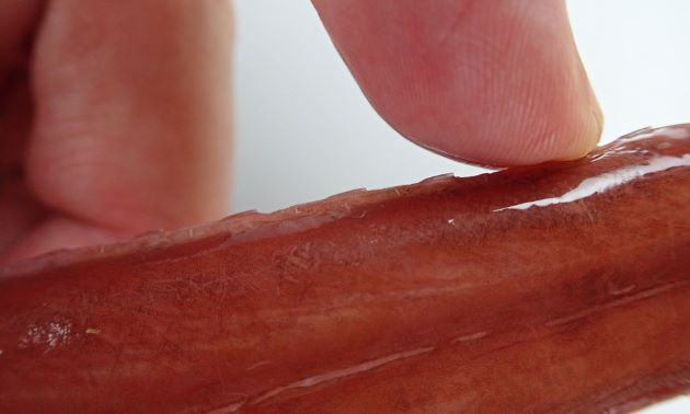 尾柄部の側線鱗に後方棘があり、後方からなぞると引っかかる。