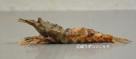 ヒメクロザコエビの形態写真