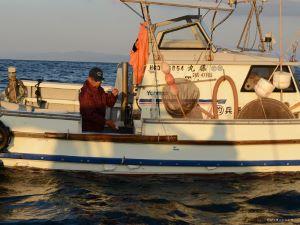 沼島のマアジの一本釣り