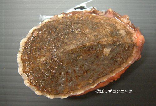 サルアワビの生物写真