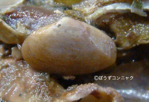 クチベニデの生物写真