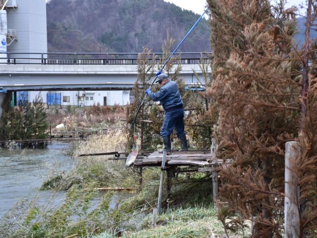 村上市大川のコド漁