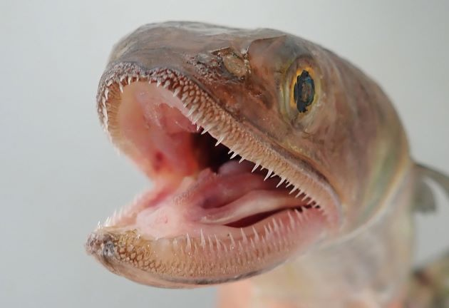 頭部はまさに蛇(へび/爬虫類)を思わせる。