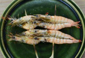 シバエビ(Shiba shrimp)