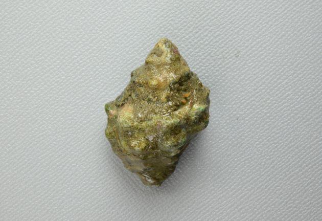 殻長4cm前後になる。体層はふくらみ螺塔は比較的低い。結節は黒い。通常石灰質で覆われたり、海藻などが付着している。