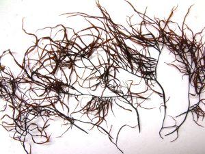 カタノリのサムネイル写真