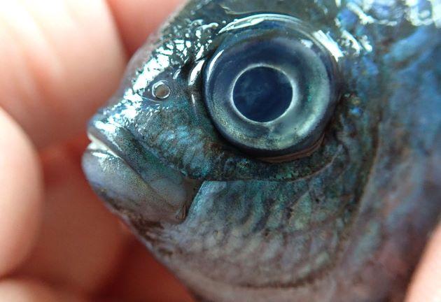 鼻孔周辺をのぞき涙骨は鱗に覆われる。