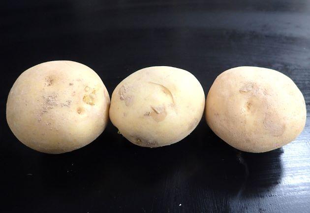 ジャガイモの形態写真