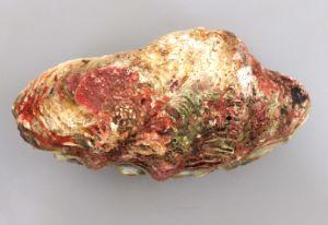 トガリシラナミのサムネイル写真