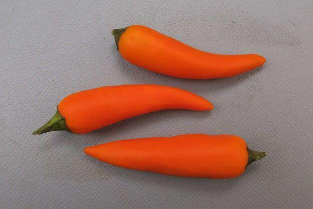 ベトナムオレンジ/ベトナムの品種。