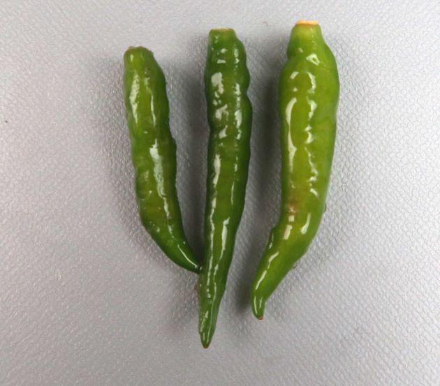 プリンキーヌー/タイから輸入されたもの。非常に辛みが強く、タイではナンプラーなどと合わせて料理に使われる。