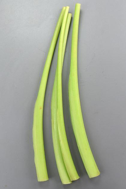 ハスイモの形態写真