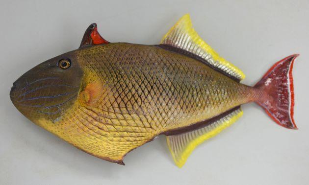 SL 24cm前後になる。雌雄で体色が異なる。体側に縦縞がなく、頬部分に5本から6本の溝がある。鱗に突起がなく、生時に表面に明瞭な灰色斑があある。[雄]