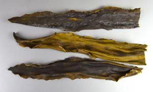 ホソメコンブのサムネイル写真