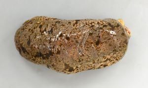 オオクリイロナマコのサムネイル写真