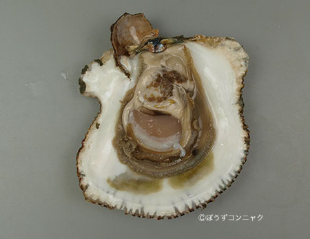 貝殻のなかに海水が入り込み染み状になる。
