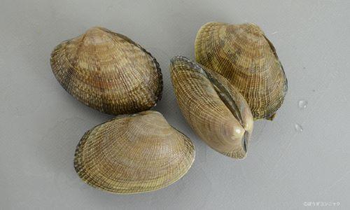 殻幅4センチ前後になる。貝殻は楕円形布目状の筋がある。模様のあるなしがあり、模様は多様。写真は北海道産で模様がない。
