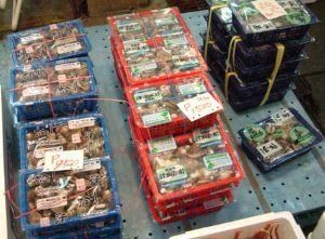 市場でのシナハマグリ