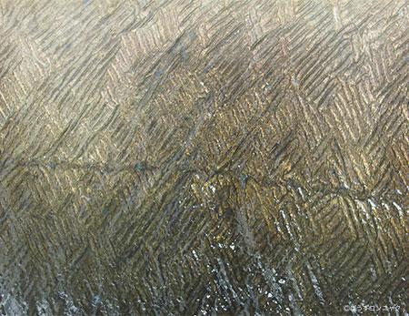 「りんず」。利根川で下りウナギの大型のものは鱗が浮き上がってくる。これを「りんず」とか「ぜにがた(銭形)」というが、独特の輝きがある。[千葉県香取市小見川町]