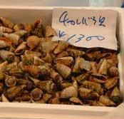 市場でのチャンバラ貝