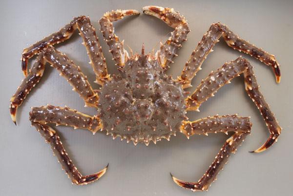 タラバガニ | 甲殻 | 市場魚貝類...