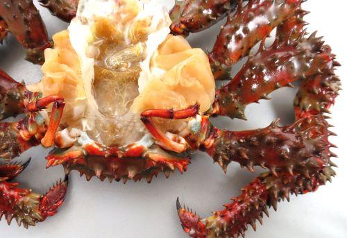 鉗脚(はさみ)を含めて脚は10本。いちばん後方にある脚は非常に小さく、鰓の掃除をするなどをしている。この構造はヤドカリに似ている。