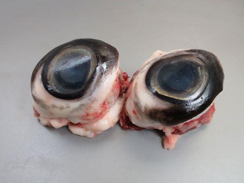 ミナミマグロの目玉