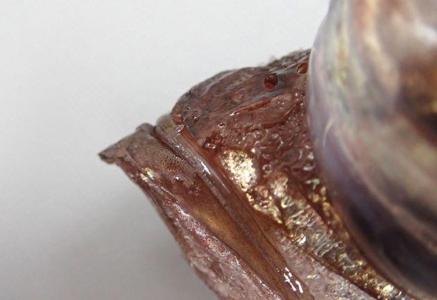 尻鰭は長く基部の幅よりも長い。