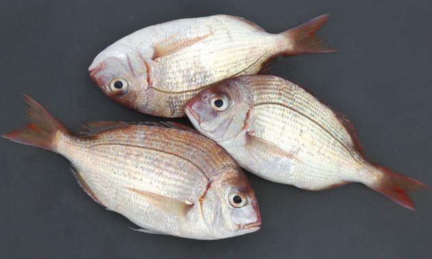 <c2>幼魚</c2>体長12-14cmほどを関東では「春日子(かすご)」という。また山口県などでは「しばだい」。