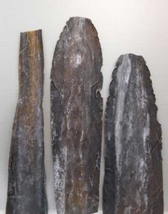 オニコンブのサムネイル写真