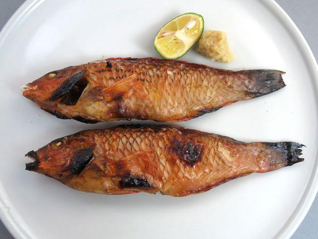 ホシササノハベラの素焼き