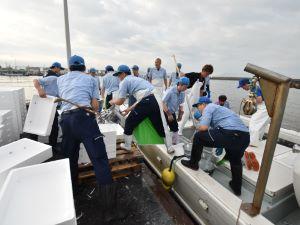 広島県の「こいわし」水揚げ