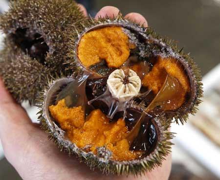 中の生殖巣は色が濃くオレンジ色、北方四島などは赤みが弱い。このため市場では「赤(あか)」と呼ぶ。画像は北海道室蘭魚市場にて