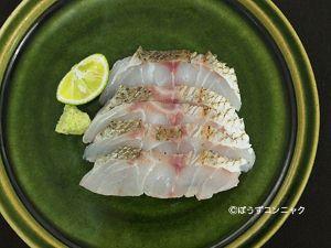 コイチの刺身(焼霜造り)