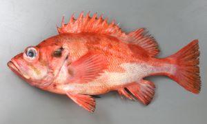 バラメヌケのサムネイル写真