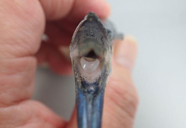 海面にいる甲殻類などをすくって食べる。