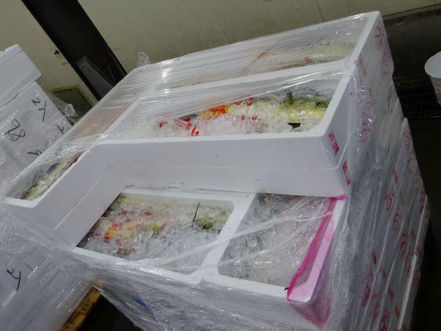 松本市公設市場に山積みになっている三重県産シイラ