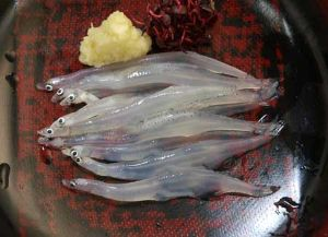 シラウオの刺身