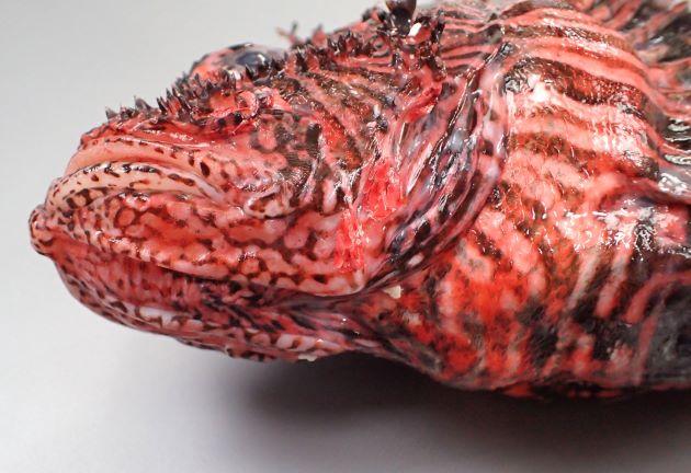 頭部腹面にも不定形の模様がある。