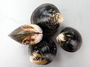 オキシジミのサムネイル写真