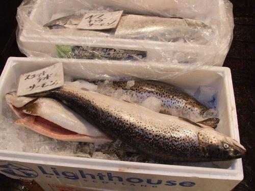 チルドで輸入されたタイセイヨウサケ