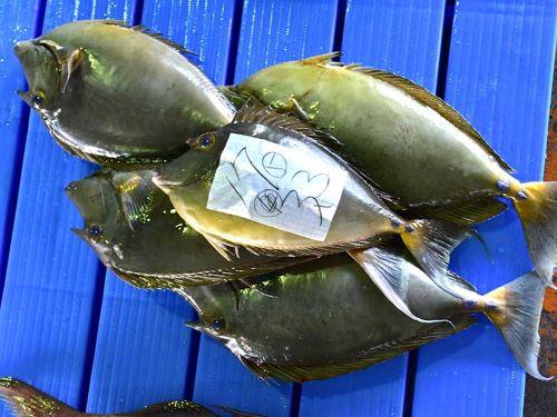 沖縄本島の市場に並ぶチヌマン