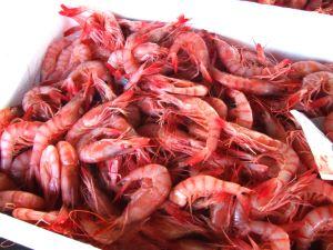 静岡県沼津魚市場に水揚げされたヒカリチヒロエビ