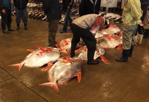 徳島県徳島市徳島中央市場に並ぶアカマンボウ