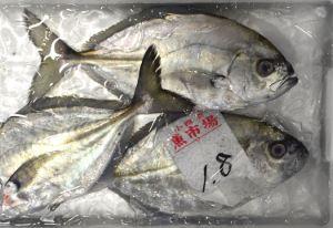 オキアジ 小田原魚市場